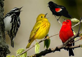 sonnerie-Le-chant-des-oiseaux-mp3
