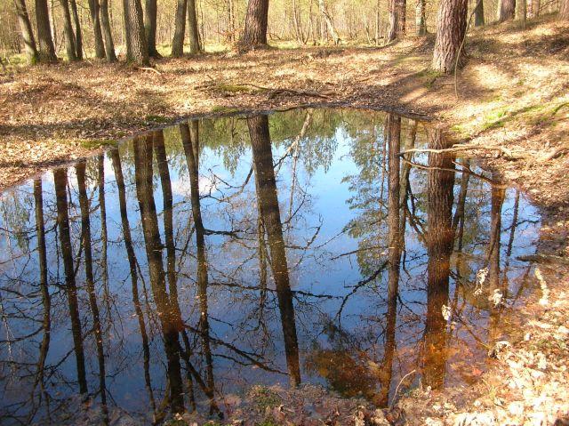 Pawski Ług, Świebodzin, woda, drzewa