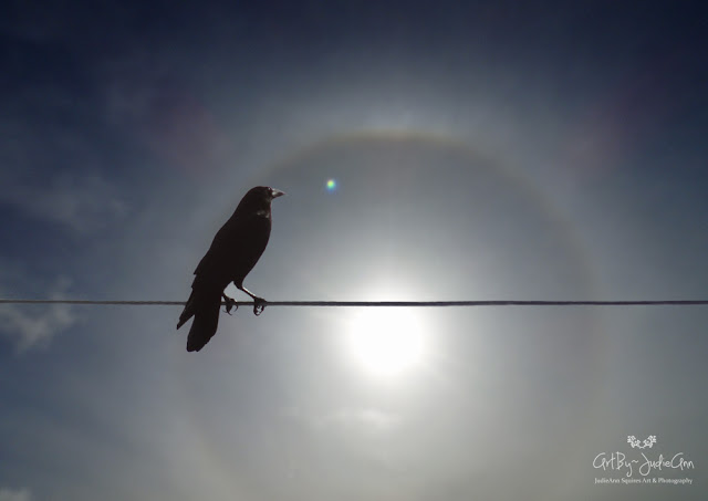 Bird and Sky photo