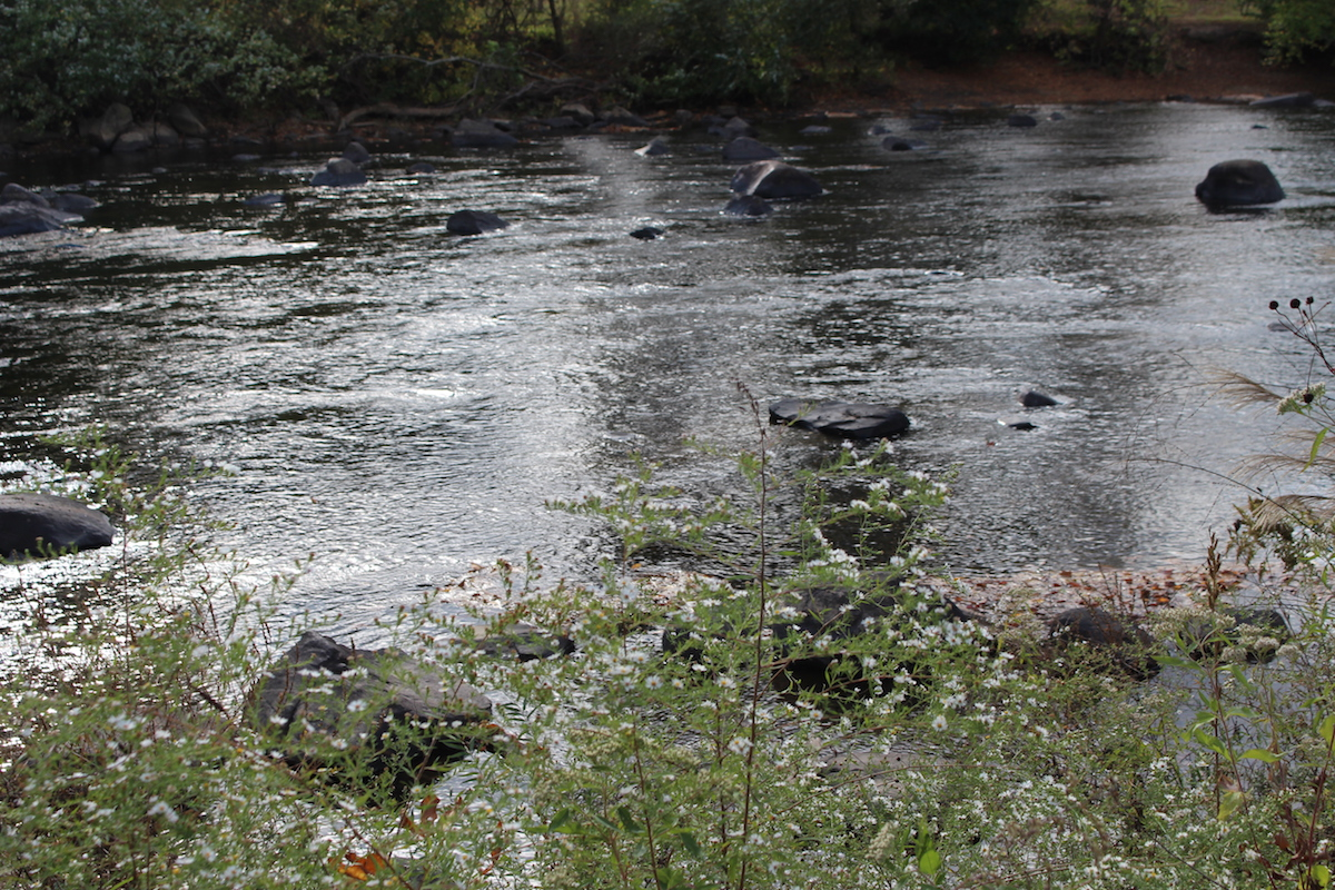 This is a close up of the river at Brandywine Park.