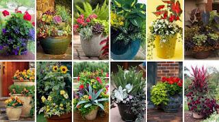 ΚΗΠΟΥΡΙΚΗ: 7 Μυστικά και 50+ ΙΔΕΕΣ για ΣΥΝΔΥΑΣΜΟΥΣ φυτών σε ΓΛΑΣΤΡΕΣ-ΖΑΡΝΤΙΝΙΕΡΕΣ