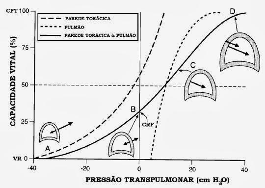HISTERESE PULMONAR PDF