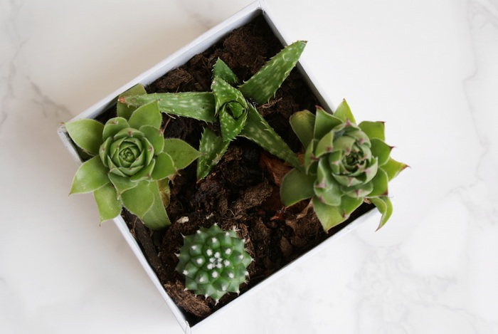 diy succulents in a box
