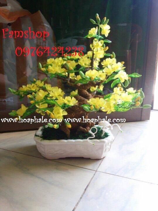Goc bonsai cay hoa mai o Tran Binh