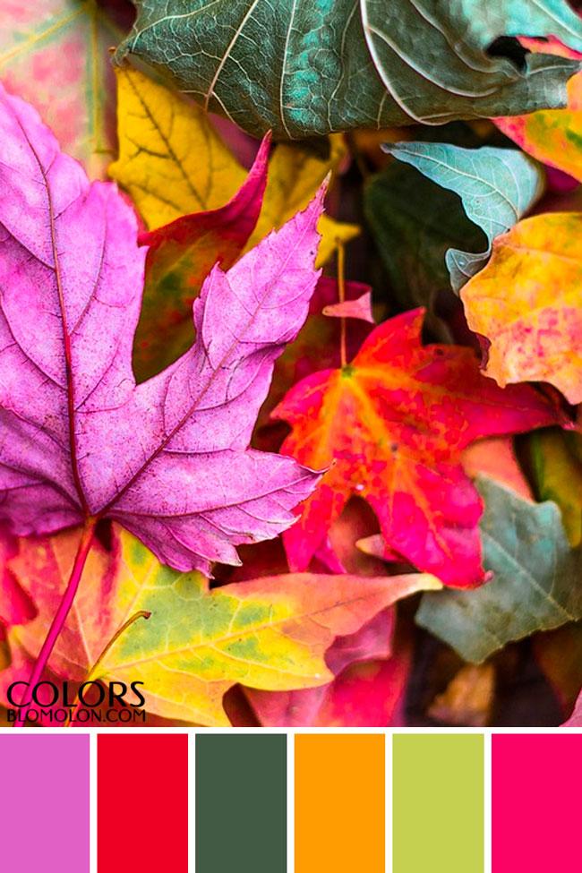 paletas_de_colores_variedad_de_temporada_6