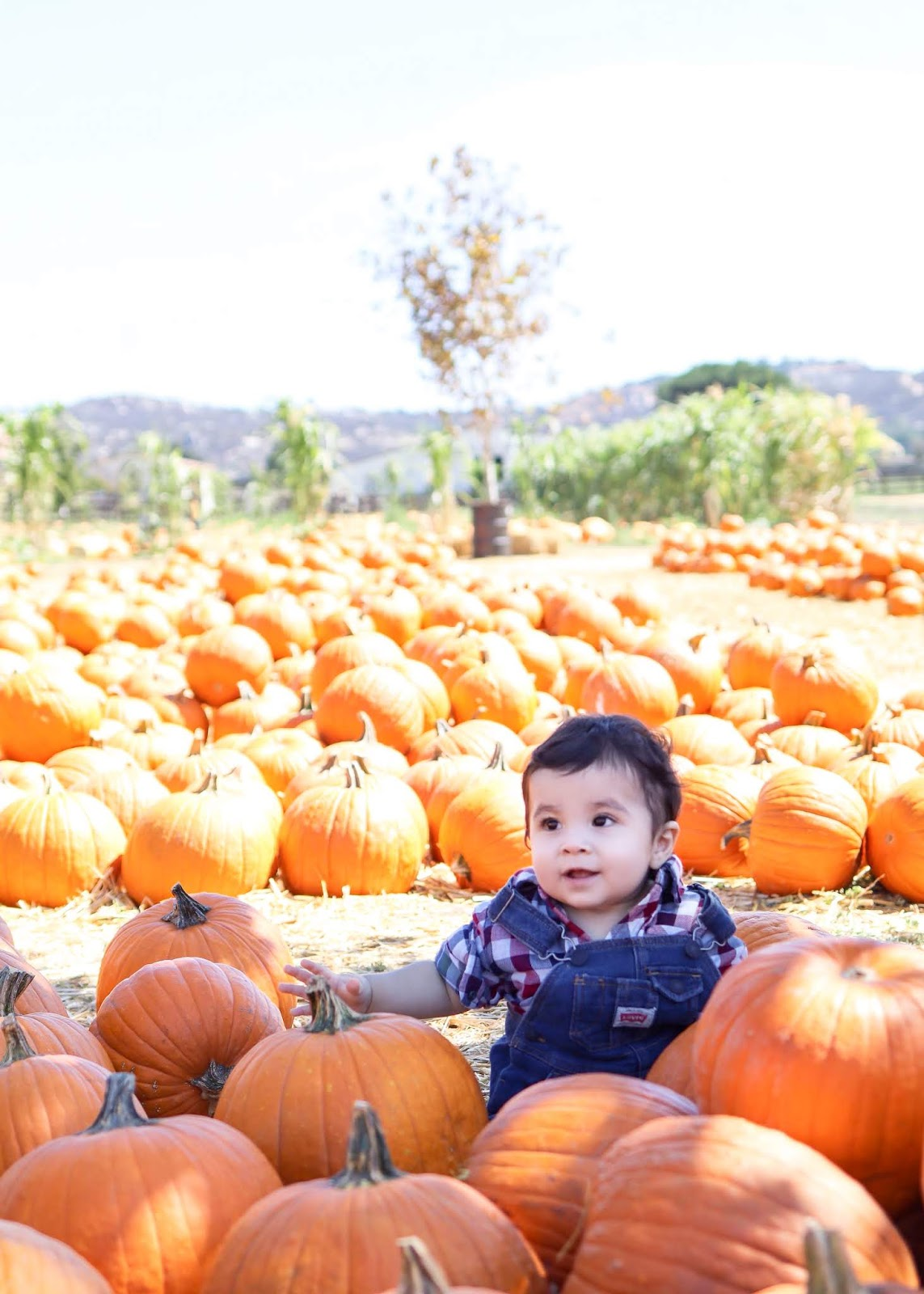Bates Nut Farm Pumpkin Patch Baby Boy Pic, Pumpkin Patch Baby Boy Pic