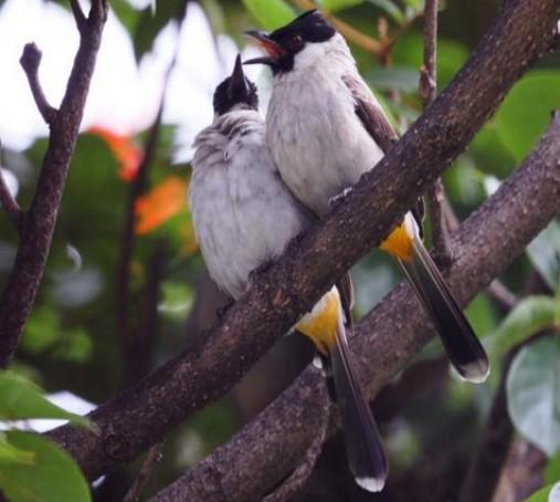 2000+ Gambar Burung Yang Paling Mudah  Terbaru