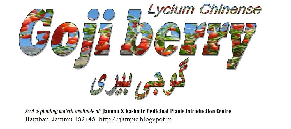 Jammu And Kashmir Medicinal Plants Introduction Centre Goji