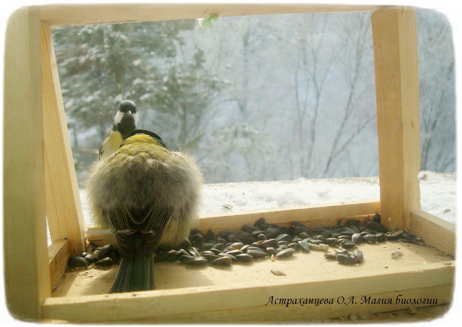 Кормушка птиц за окно своими руками фото 428