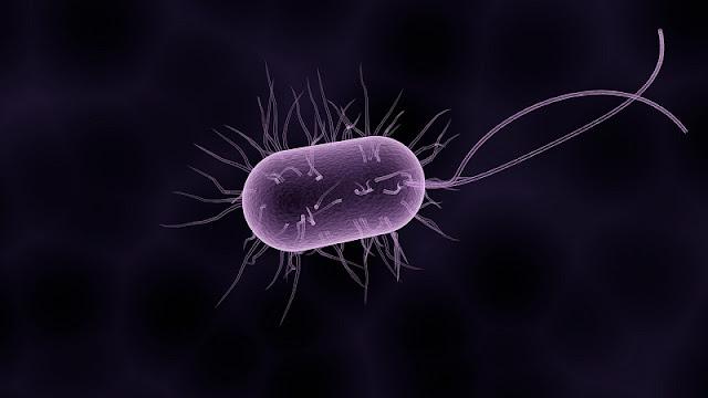 ilustrasi bentuk bakteri