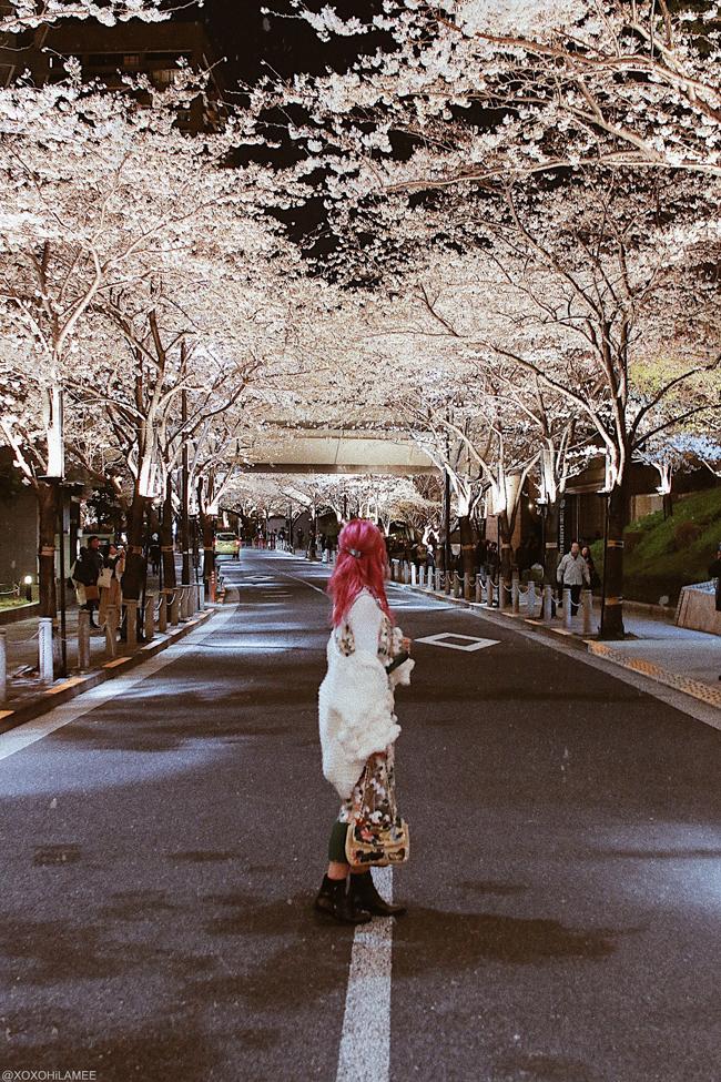 Japanese Fashion/lifestyle blogger,MizuhoK,LIFE STYLE || 2 MONTH UPDATE  [2/6] ROPPONGI 1CHOIME SAKURA