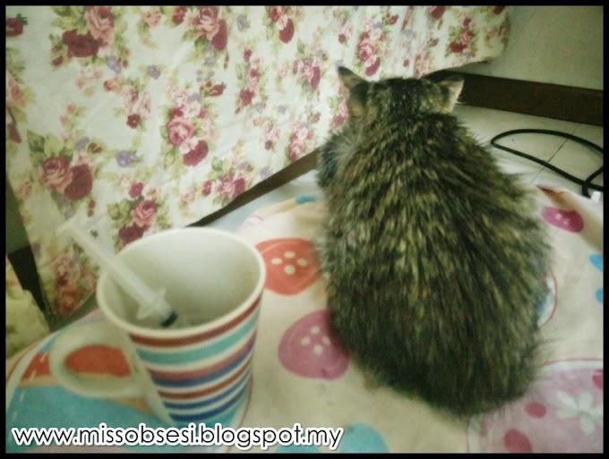 Anak Kucing Hilang Selera Makan | UDIN