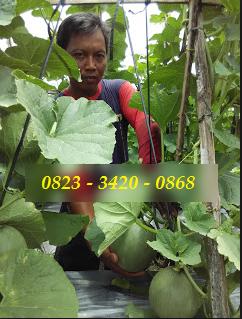 AGEN NASA DI Matangkuli Aceh Utara - TELF 082334020868