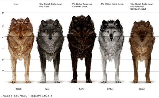 Dire Wolf Size Compared To Human