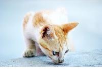 Influenza secondo le 5 Leggi Biologiche come il gatto