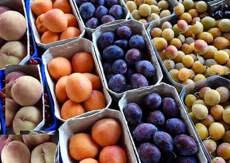 Common Poisonous Foods -Picture of stone fruits. The seeds of Apple, Peach, Apricot, Plums, Nectarine, Cherries are poisonous.