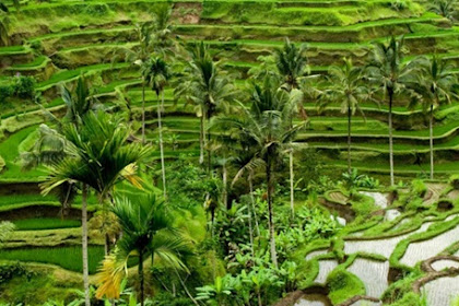 Ubud Bali Terpilih Jadi 1 dari 10 Destinasi Terbaik Dunia Versi Tripadvisor