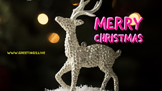 New images of Christmas deer