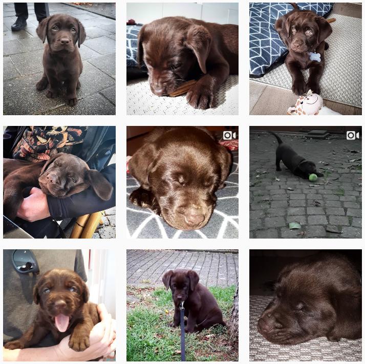 One month of Cooper: a little retrospect on having a Labrador Retriever puppy.