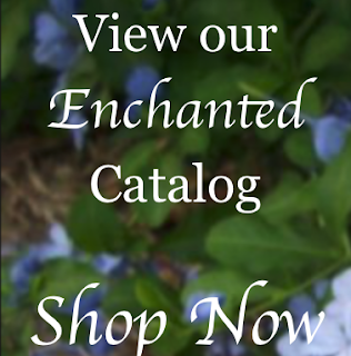 two cats witchery shop catalog