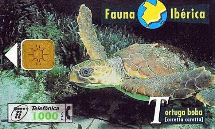 Tarjeta telefónica Tortuga boba (Caretta caretta)