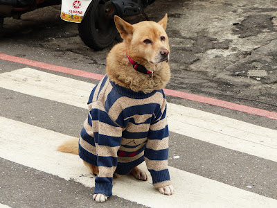 Dog Clothes - Fad, Fun Or What?