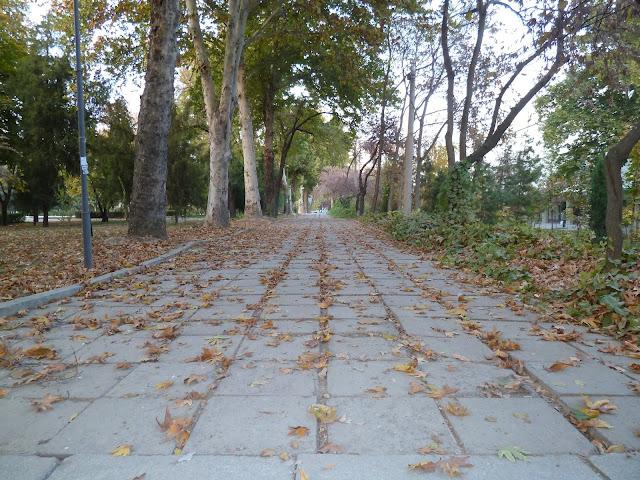 Ouzbékistan, Tachkent, automne, © L. Gigout, 2012