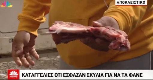 Αίσχος : Πακιστανοί στο Μενίδι εξέτρεφαν, έσφαζαν και έτρωγαν σκυλάκια!!! - Σοκαριστικό Βίντεο και Φωτογραφίες