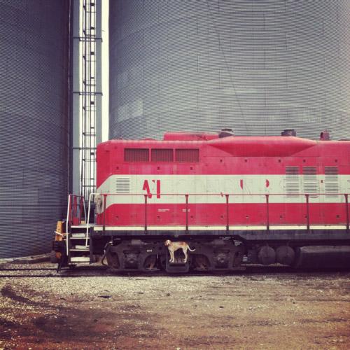 Maddie on locomotive