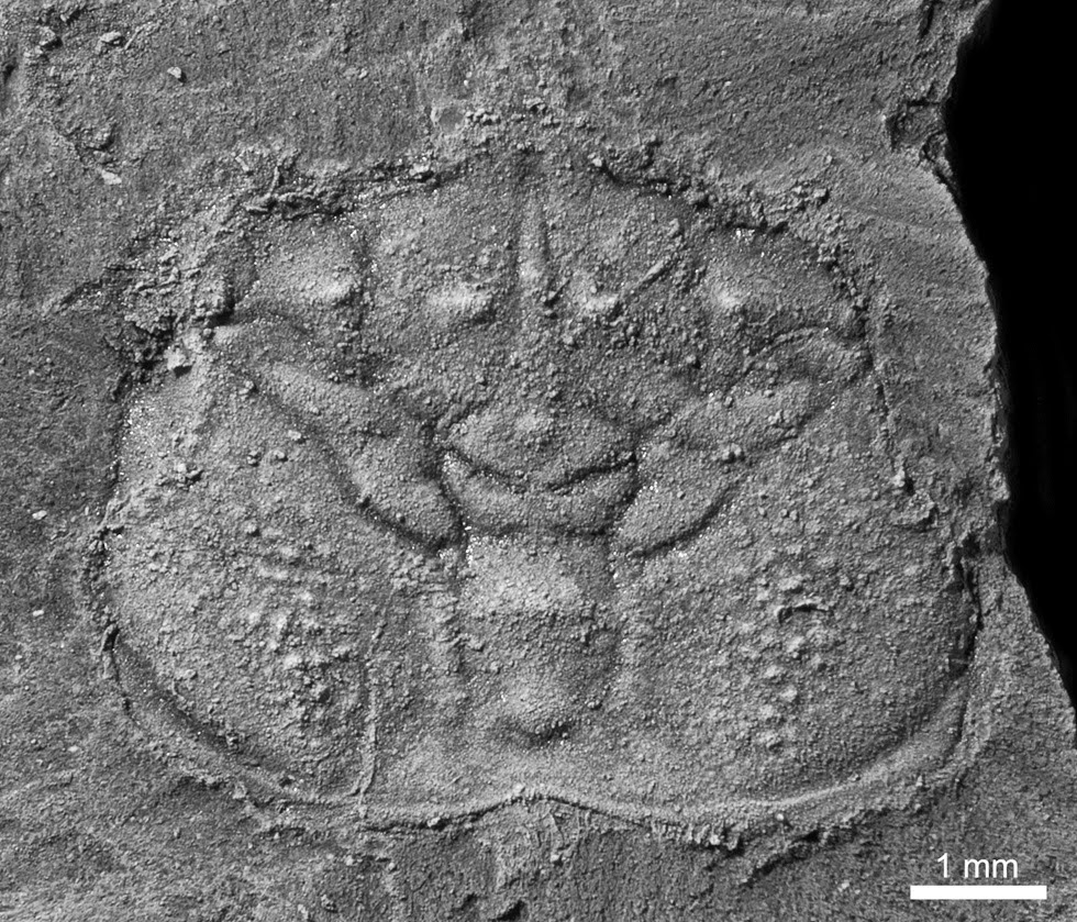 110-million-year-old crustacean holds essential piece to evolutionary puzzle