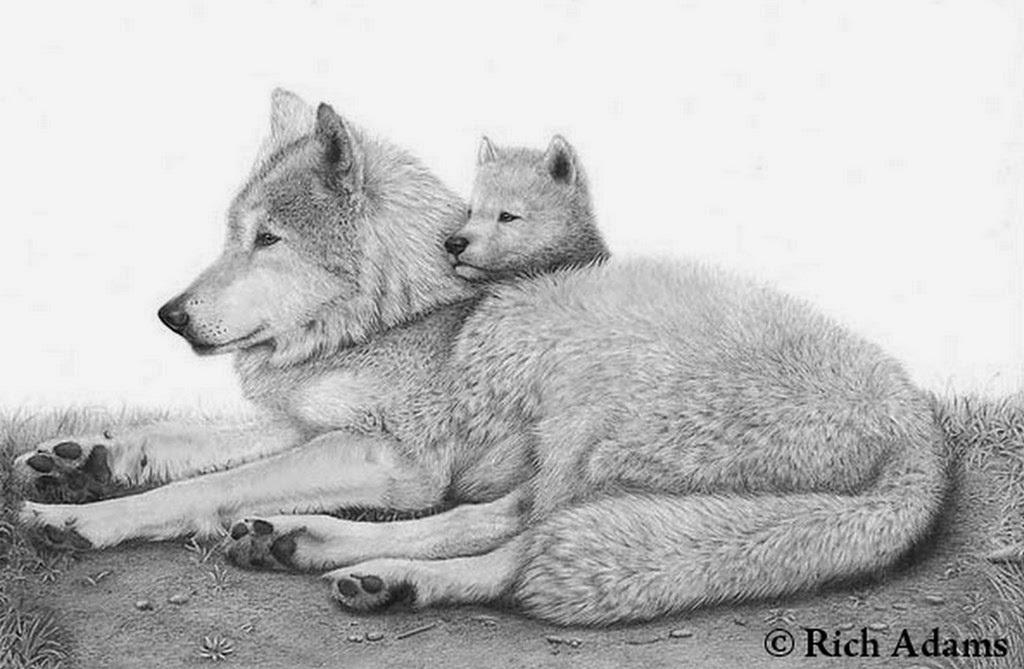 Dibujos A Lapiz Animales. Amazing Dibujos A Lapiz De