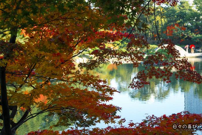 Etang et momiji, jardin shukkei-en, Hiroshima-shi