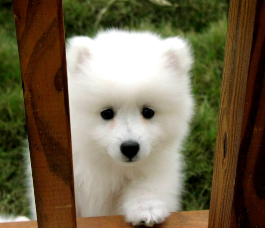 Cute White Dogs Best Wallpapers Hd Collection