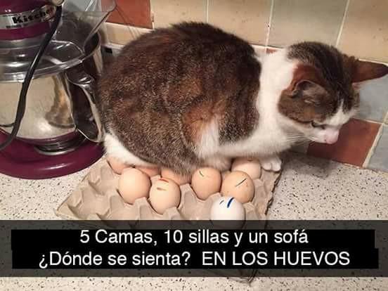 gato acostado sobre caja de huevos