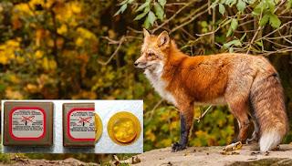 Αποτέλεσμα εικόνας για εμβολιασμού των αλεπούδων κατά της λύσσας, την άνοιξη του 2017: