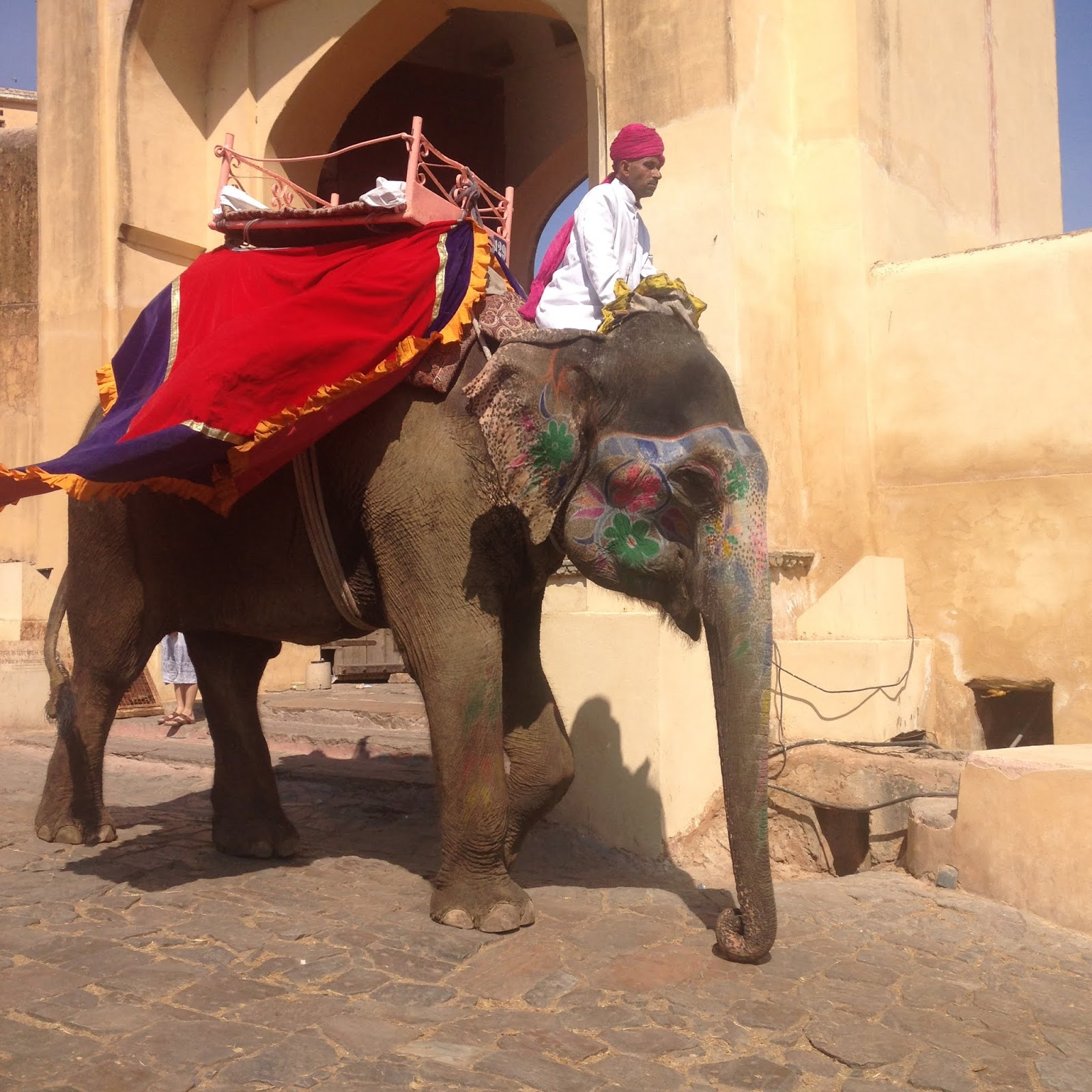 Elephants are used at the Amer Fort