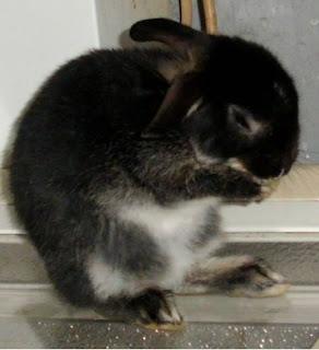 króliczek miniaturka - Niuniek Dziuniek