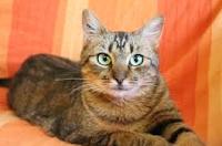 4 Ras Kucing Unik Yang Hobinya Menyembunyikan Perhiasan