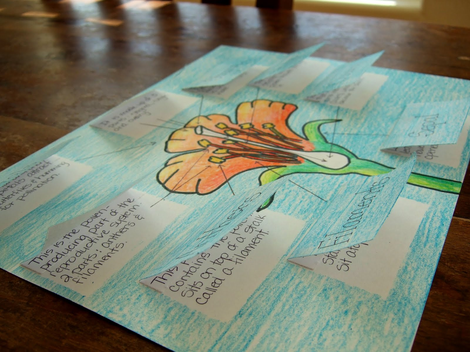 The Inspired Classroom Flower Parts And Their Jobs A