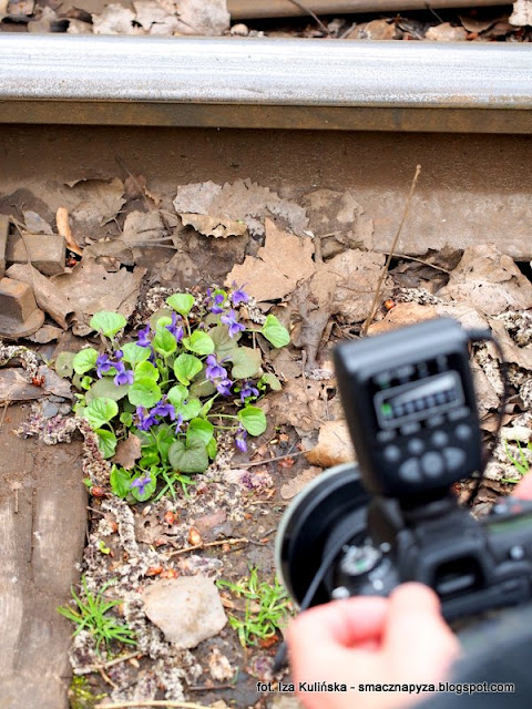 fiolek, kwiaty jadalne, kwiatk, spacer, las bemowski, wiosna, grzybobranie