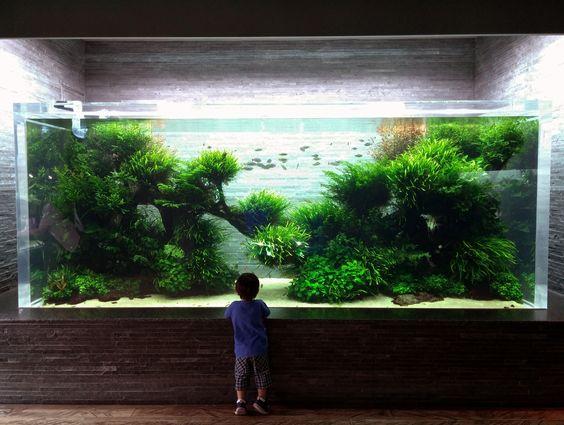 Bố cục thủy sinh trồng nhiều dương xỉ - Sir Amano