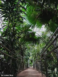łódzka palmiarnia w środku