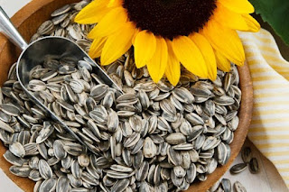 Kandungan nutrisi – Manfaat kwaci biji labu kuning untuk kesehatan