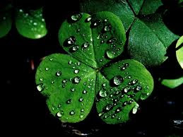 shamrock hd wallpaper 2018