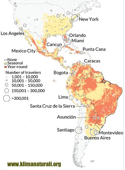 Zika Vírus | Origem e Relação com a Microcefalia