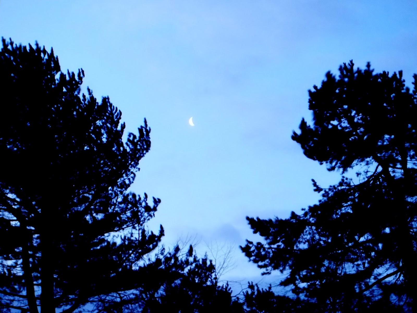 Cloudland Blue A Diary
