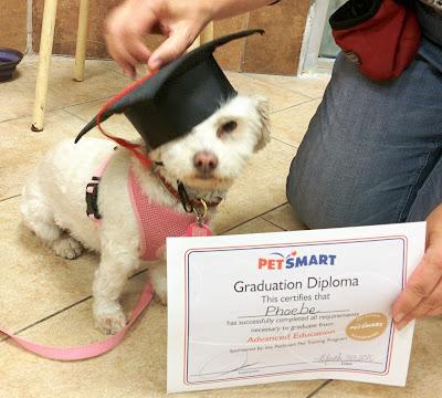 Smarty Pants Dog Training