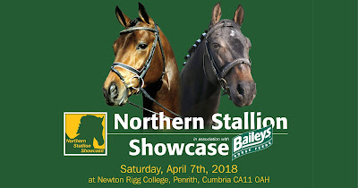 Northern Stallion Showcase