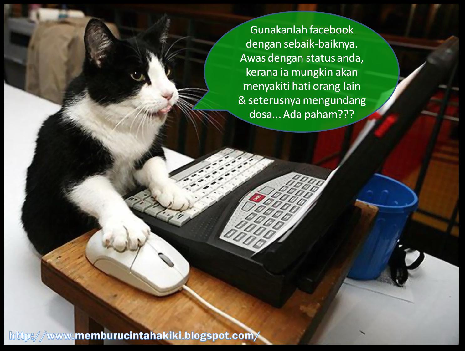 Memburu cinta hakiki Bila binatang update status facebook