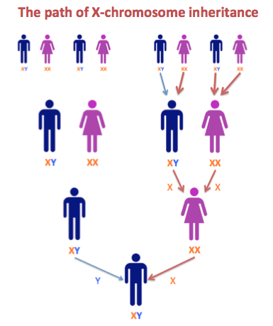 The  inheritance pathways for men and women are illustrated in ancestor fan charts below using me my maternal aunt as examples also dna family tree research step  match on rh dnaandfamilytreeresearchspot